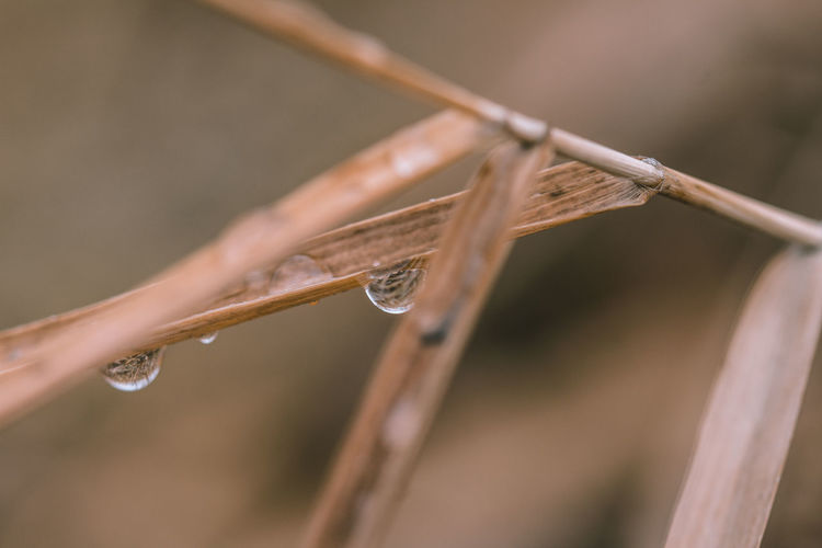 Close-up of raindrops on twig