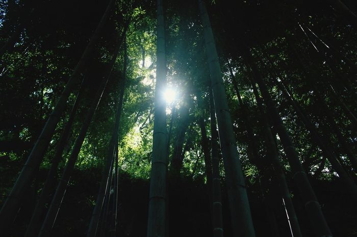 wake up Low Angle View Tree Plant Growth No People Forest Nature Green Color Bamboo - Plant Beauty In Nature Sunlight Tall - High