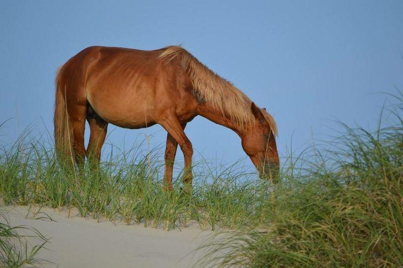 Wild Horse Animal Wildlife Grass Beauty In Nature
