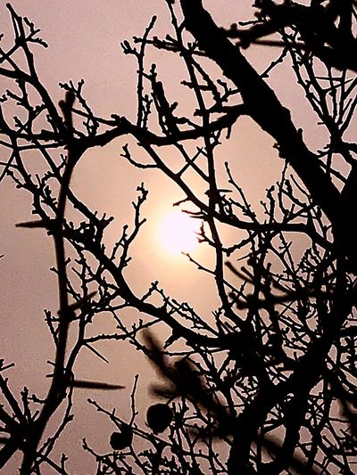 Do u see me? Or do feel me? Are you me? Cloudy With A Chance Of Sun New Beginings Meditation Moment Tree Branch Plant Sky Silhouette Low Angle View No People Tranquility Bare Tree