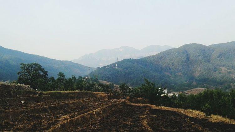 待耕 Tree Mountain Rural Scene Tea Crop Agriculture Forest Fog Crop  Sky Landscape