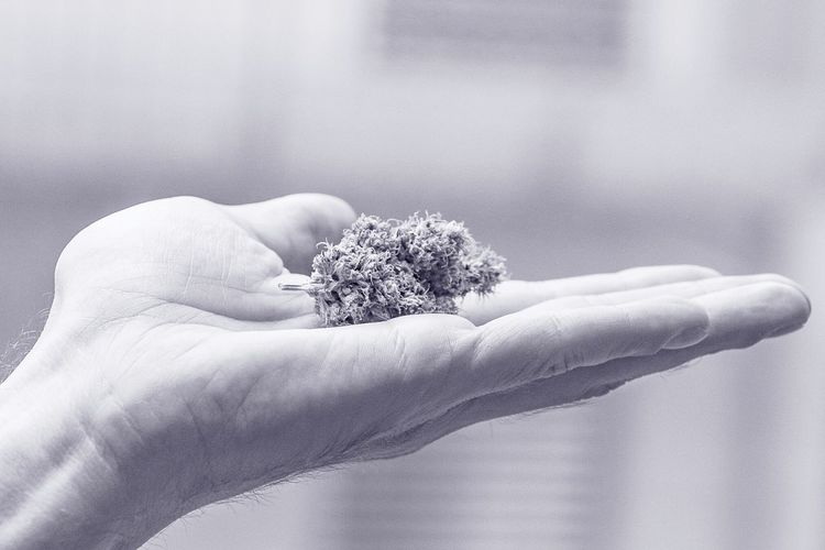 Human Hand Marijuana - Herbal Cannabis Holding Close-up Sky Medical Cannabis Cannabis - Narcotic Concepts And Topics Alternative Medicine Drug Abuse Narcotic Herbal Medicine Recreational Drug Smoking Cannabis Plant