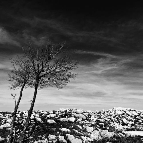 Tree Nature Landscape Beauty In Nature Bare Tree Sky Lone Tranquility Remote Winter Branch Snow Outdoors Scenics No People Day Cold Temperature