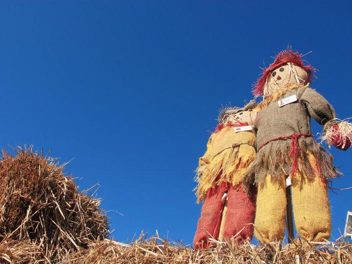 Ragdoll Doll Doll Photography Pei Prince Edward Island Canada Blue Sky