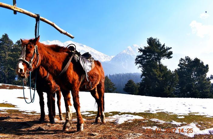 take a rest after high climbing Snow ❄ High Mountains And Sky HighMountains Photos Photography India Naturephotography Panoramic Landscape Photographer Mountain View Phtographylovers Photography Phtotoftheday Phtograpy Festival Roapway Horse Working Animal Horseback Riding Foal Animal Pen Herbivorous Horse Cart Pony Paddock Jockey Donkey Horse Racing Horsedrawn Bridle Livestock Stable Saddle Carriage Mane