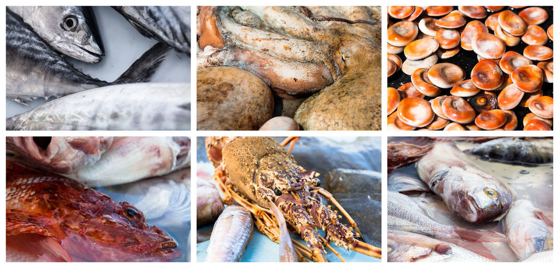 Collage of raw seafood. Close-up of lobster, octopus, redfish, mackerel and mussel Collage Collage Collection Lobster Mediterranean  Sea Shells Seafood Spiny Lobster Close-up Collection Fish Fish Market Mackerel Mediterranean Fish Mussels No People Octopus Outdoors Raw Fish And Sea Foods Redfish Restaurant Rock Lobster