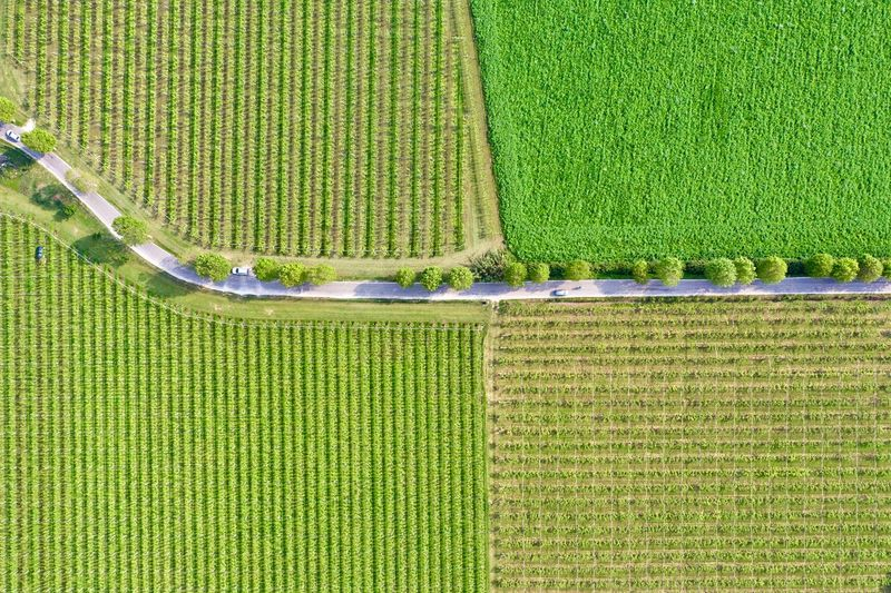 Italy, Verona: Valpolicella wineyards Drone  Green Color Agriculture Plant Land Nature No People Growth Field Wineyard Valpolicella Drone Photography From Above  High Angle View Looking Down Pattern Textured  Full Frame Crop  Backgrounds Parallel Lines Lines Landscape Springtime Day Daylight Daytime Geometry Horizontal Italy Verona Repetition Nature Outdoors Nobody Viniculture Environment Shades Of Green  In A Row Side By Side Order Abundance Rural Scene Aerial View Column Road Country Road Curve Transportation Beauty In Nature Farm Environmental Conservation