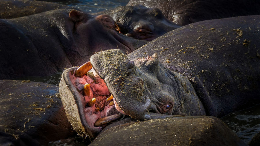 Close-up of animal resting on beach