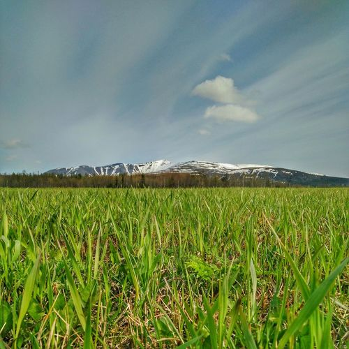 Kirovsk Sky Cloud - Sky Growth Landscape Nature Green Color Tranquility Beauty In Nature Outdoors Tranquil Scene Mountain Murmanskregion Polarspring EyeEmNewHere