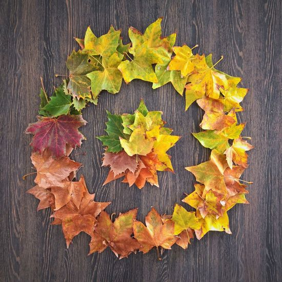 Autumn Autumn Collection Autumn Colors Autumn Leafs Autumn Leaves Autumnbeauty Beuty In Nature Beuty Of Nature Close-up Color Gradient Day Falevelek Leaf Nature No People Outdoors Palette Colors ősz