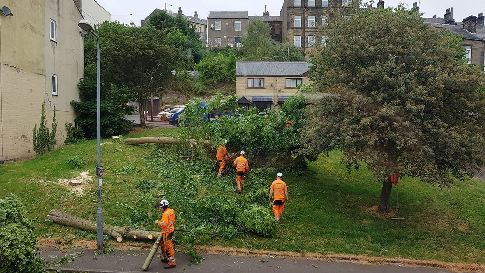 Cutting Trees Cutting Down Destruction Destroying Environment Destroying The Planet Destroying Nature Progress Bastards Tree Working Men Occupation Spraying Water Manual Worker Architecture Building Exterior Sky Residential Structure Residential District Exterior Crowded Rooftop Building