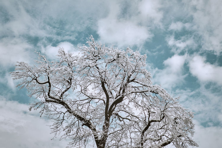 Low angle view of frozen bare tree against cloudy sky