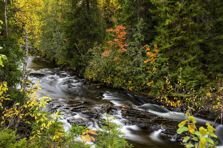 Naturephotograph