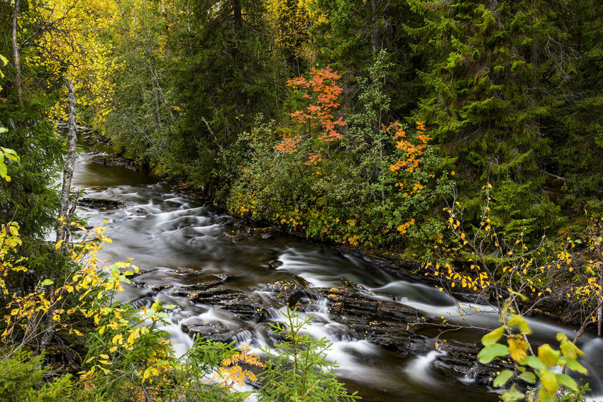 Naturephotography Forest Sweden Woods Nature Photography Forest Photography Wilderness Autumn Fall Fall Beauty Fall Colors Autumn colors Autumn Leaves Autumn🍁🍁🍁 Creek Creekside Water Tree Plant Landscape Green Color Stream Vegetation Flowing Water Relaxing Moments Scenery Beautiful