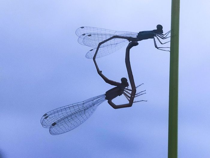 Low angle view of dragonfly on metal against sky
