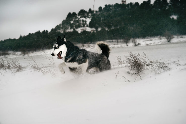 Dog standing on snow covered land