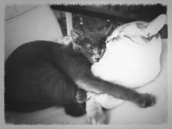 Fratelli amore. TruLove Gatti