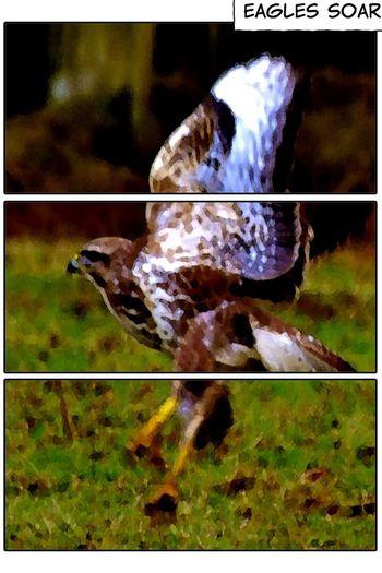 Eagles >>>