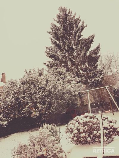 Neige Hiver Blanc Froid