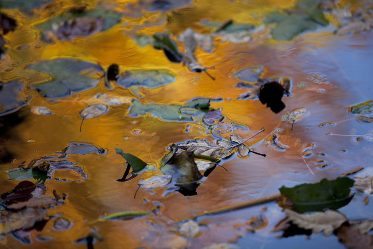 Close-up of leaves in water