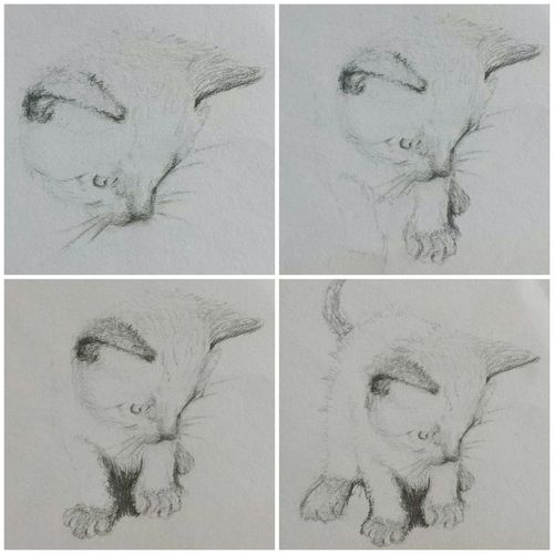 Pencil Art Cat Drawing Sweet Zeichnung