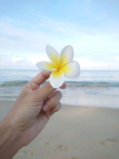 Plumeria Human Hand Flower Head Frangipani Flower Water Sea Beach Yellow Beauty Summer