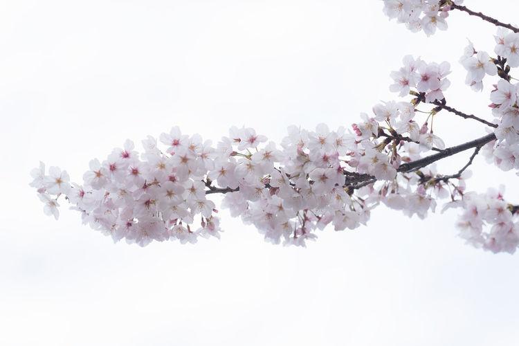 Branch of