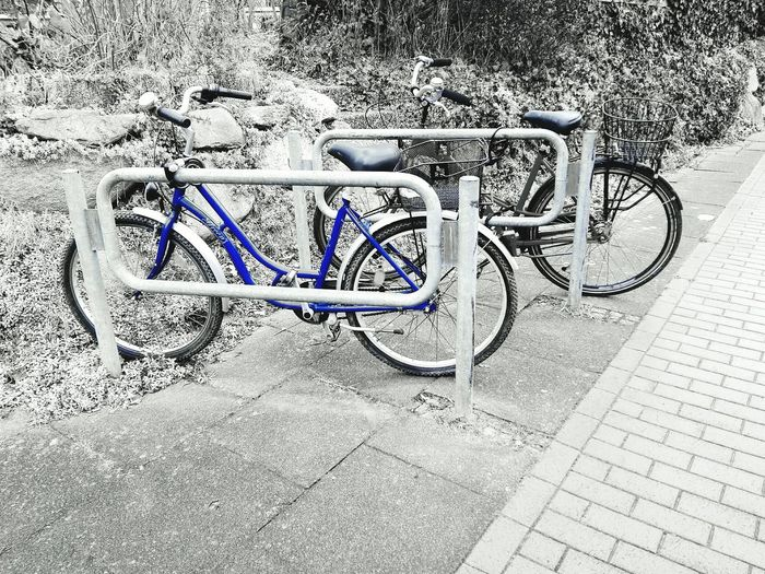 Check This Out two Bycicles in Black And White With A Splash Of Colour Blue Bycicle Parking Bycicle Art Bycicle Lovers Bycicle Unites Bycicle Photography Eye4photography  Outdoors No People Bicycle Rack Transportation Bicycle Day Fresh On Eyeem  Mobility In Mega Cities