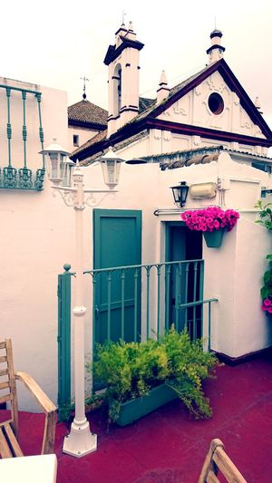 Verde Rosa Pink Bar Relaxing Patios De Córdoba Coffee Timecoffe Afternoon Relaxing Colors No People