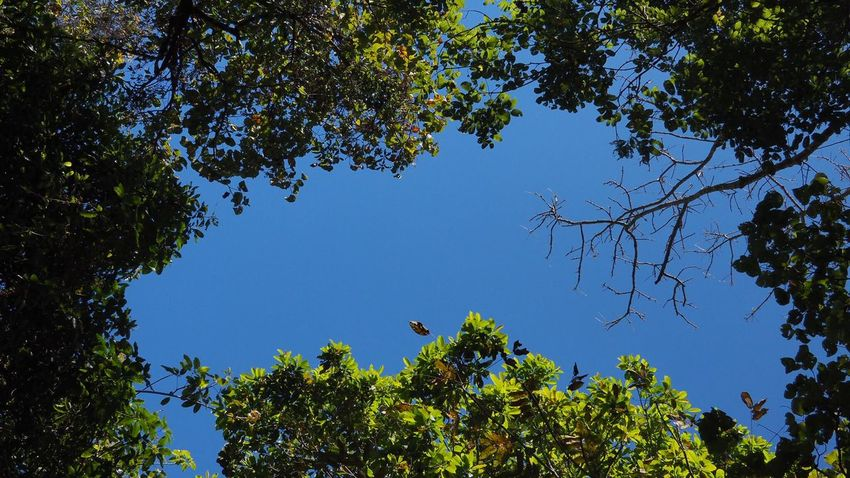 Color of Nature Tree Nature Blue Low Angle View Growth Branch Beauty In Nature Leaf Outdoors