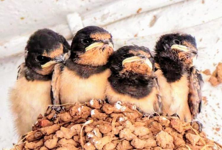 Baby Birds Nest