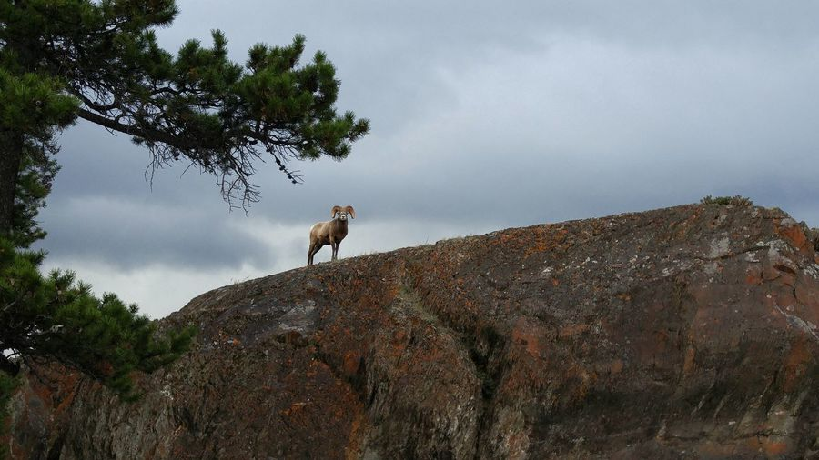 Horse standing on rock against sky