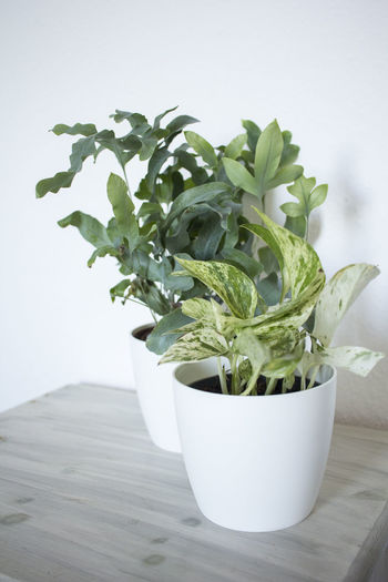 Green Color Indoors  Leaf No People Plant Plant Part Potted Plant Still Life Table