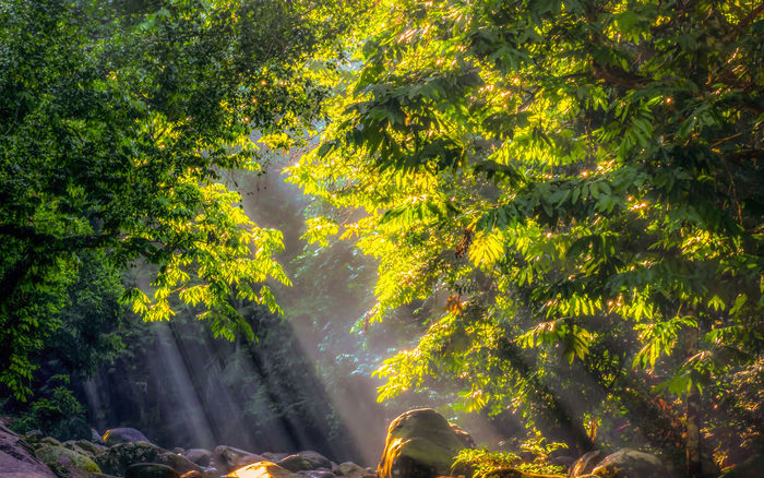 Nature Outdoors Tree Beauty In Nature Forest Day No People Scenics Water Waterfall Freshness Rays Of Light Sunrise Tanjung Malim Morning