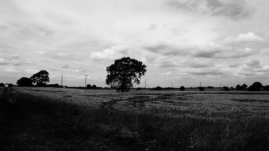 Black & White Landscape Photography Monochrome Meadow