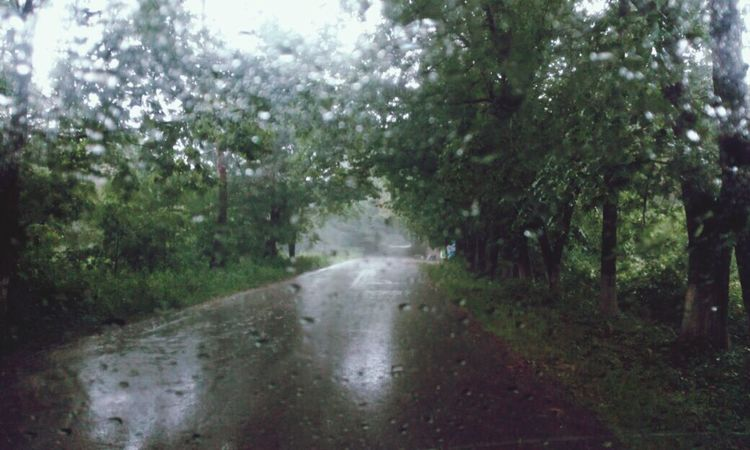 Rain Wet Tree Weather Nature Drop No People Water RainDrop Road Torrential Rain The Way Forward Forest Outdoors EyeEm Gallery Background Backgrounds EyeEm Nature Lover Beauty In Nature Rain☔ Rainy Days☔ Rain Rainy Days Rainy Rain Drops An Eye For Travel Summer Road Tripping