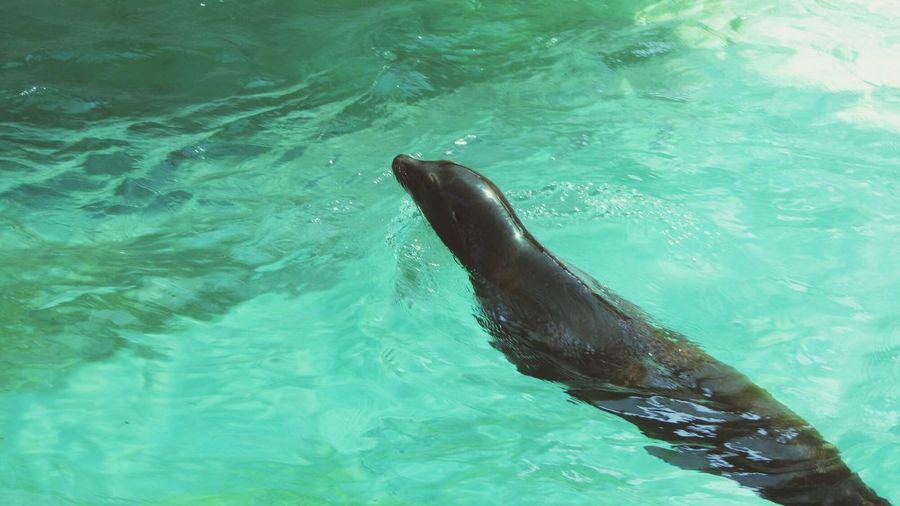 Seal Animals