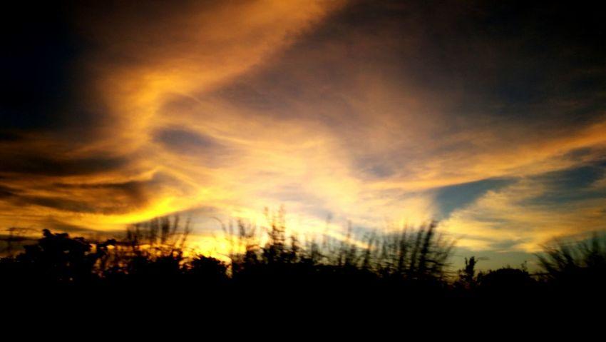Silhouette Tree Nature Cloud - Sky Landscape Beauty In Nature Sky GoásBrasil Sunrise Silhouette K6 Plus