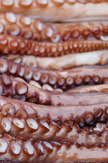 Nature Suction Tentacles Close-up Day Food Food And Drink Freshness Full Frame Healthy Eating No People Octopus Octopus Tentacle Predator Ready-to-eat Sea Still Life Suction Cup