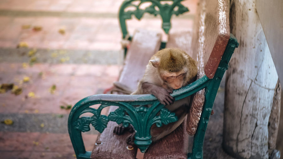 Primate Animal Themes Animal Wildlife Day Lonly Monkey Outdoors Sad Seat Sitting