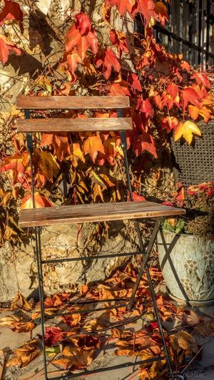 Couleur d'automne .... Streetphotography Street Street Photography Streetphoto
