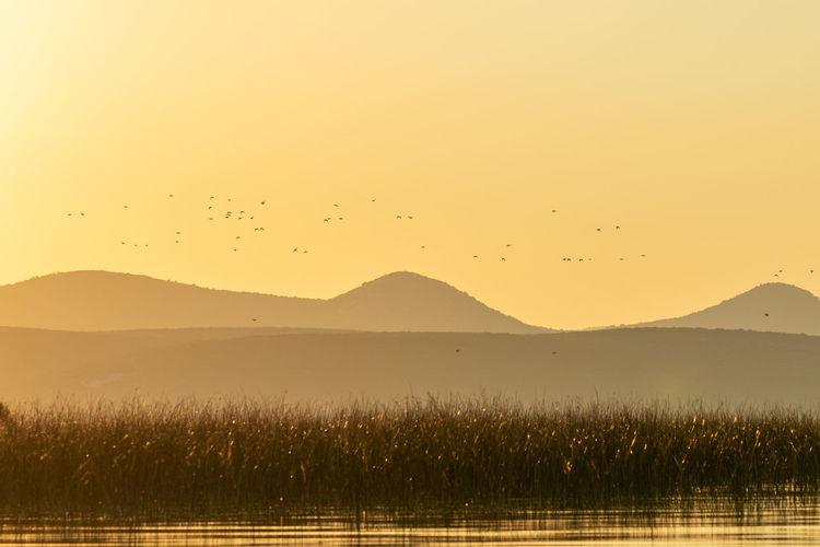 Birds in flight against the clear sky at sunset, vransko jezero in dalmatia, croatia
