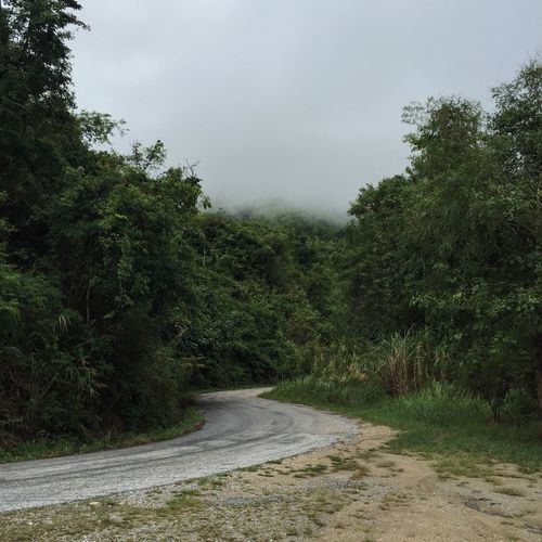 Heading to the fog Roadtrip Curve Tree Forest Rainforest Fog Wood WoodLand Nature Natural Weather Better Weather Scenics Life Green Landscape Maewong Nationalpark Kamphaengphet Thailand Wlodsimier