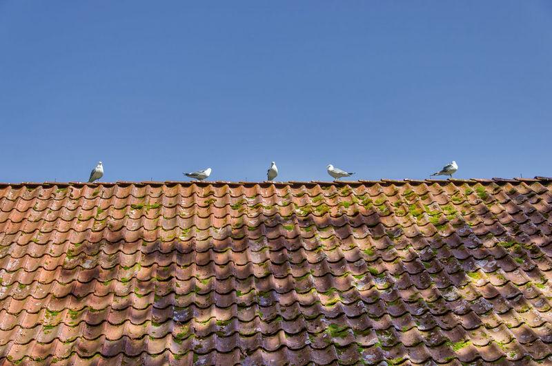 Bergen Norway Rooftop Animal Themes Animal Wildlife Birds Blue Clear Sky Sky