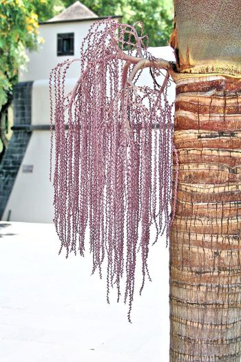 Waiting for a date Arecaceae Berries Date Date Palm Date Palm Date Palm Tree Date Palms Dates Foliage Foliage Plant Mediterranean  Mediterranean Diet Mediterranean Food Mediterranean Life Mediterranean Lifestyle Mediterranean Nature Palm Tree Palm Trees Palmtree Palmtree Trunk Palmtrees Phoenix Dactylifera Tree Tree Trunk Trunk