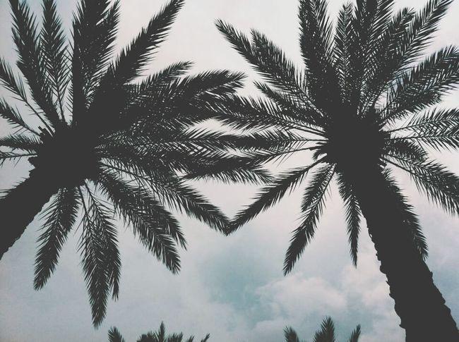 wanna go back to florida