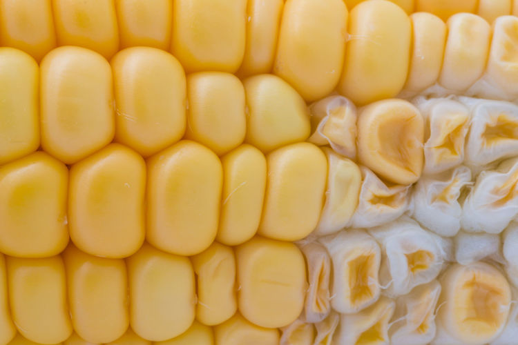 Abundance Backgrounds Close-up Corn Corn On The Cob Food Food And Drink Freshness Full Frame Healthy Eating Indoors  No People Pattern Seed Shape Still Life Sweetcorn Vegetable Vegetarian Food Wellbeing Yellow
