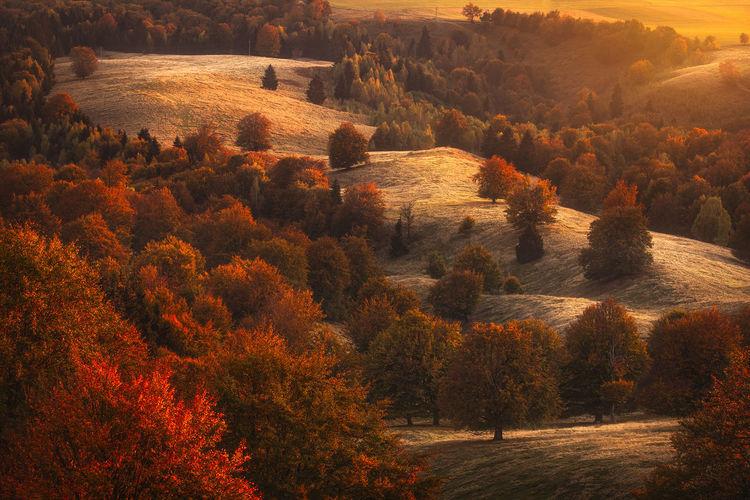 Sunset light over the autumn fields of harghita region, romania.