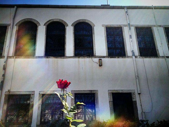 Topkapı Sarayı İSTANBUL Rose🌹 Fullspectrum Colour Light Rainbow Windowbox Sunlight EyeEmNewHere