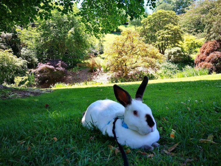 Animal Themes Beauty In Nature Bunnies Bunny  Bunny 🐰 Day Domestic Animals Field Garden Garden Photography Grass Green Color Growth Mammal Nature No People One Animal Outdoors Pets Rabbit Rabbits Sky Speedy The Cheeky House Bunny Tree Pet Portraits